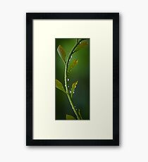 precious rain Framed Print
