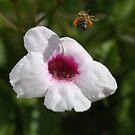 Bees Feast by Joy Watson