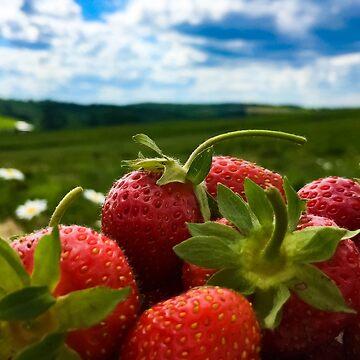 Strawberries galore!!! by KWhaleBone