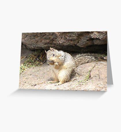 Shy Rock Squirrel  Greeting Card