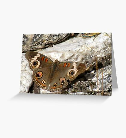 Butterfly ~ Common Buckeye Greeting Card