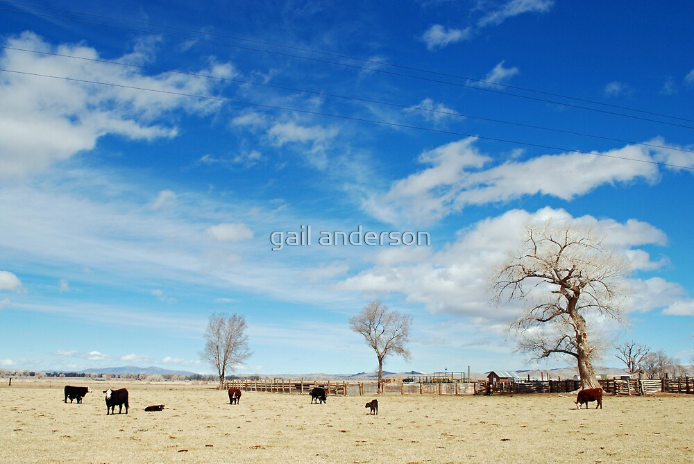 cows in the field by gail anderson