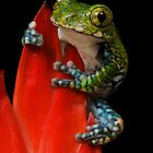 Frog by Taff