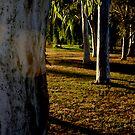 Tree, trees wonderful trees by KimOZ