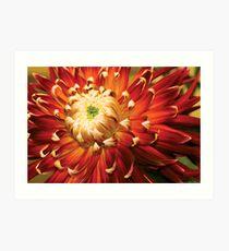Dahlia - Nature's Radiance Art Print