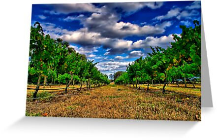 """""""Between The Vines"""" by Phil Thomson IPA"""