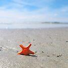 Sea-star by bricksailboat
