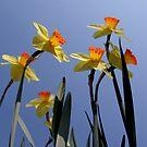 Yellow flowers in my garden. by Elena Martinello