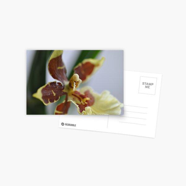 Open Wide Postcard