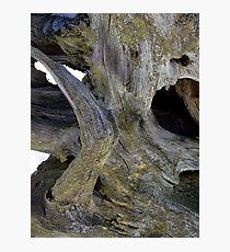 Deadwood Photographic Print
