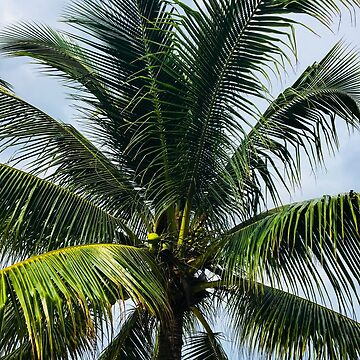 Beach palm tree by KWhaleBone