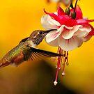 HUMMINGBIRDS by RoseMarie747