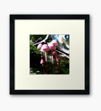 April Forest Pinks Framed Print