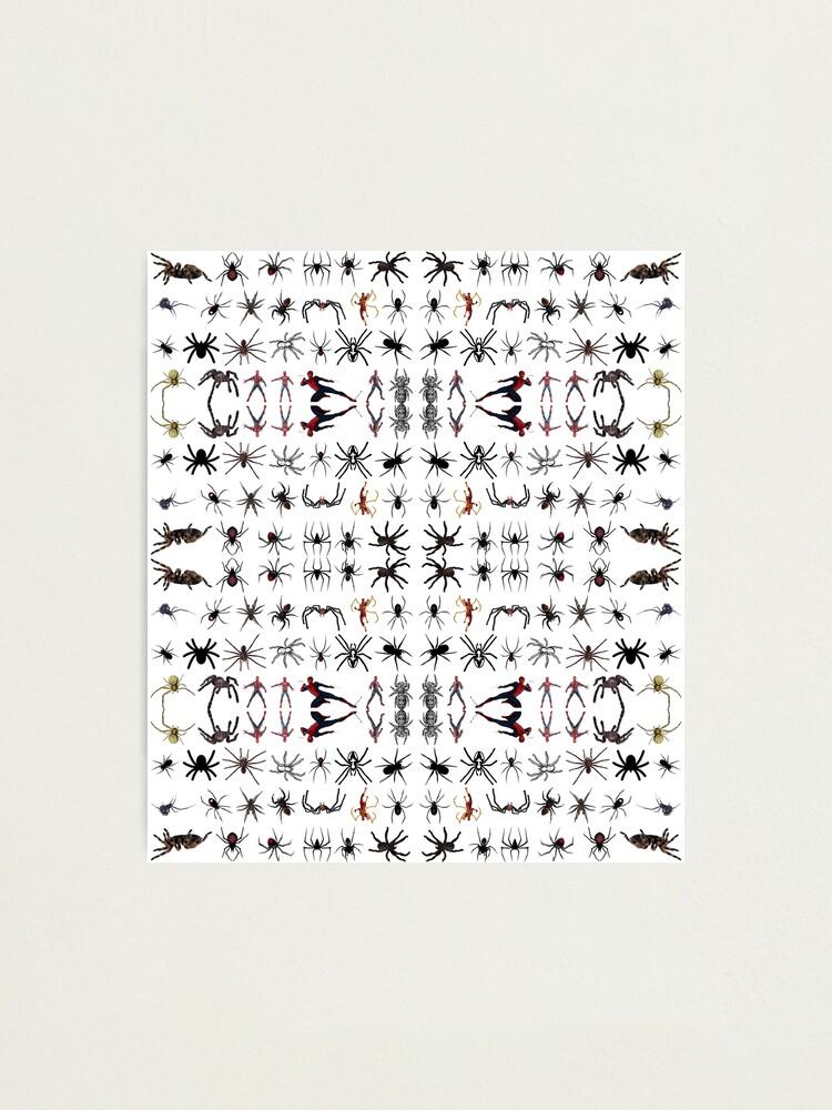 Alternate view of Spider, spinner, caterpillar, cross, cross-piece, frog, crossing, turnstile Photographic Print