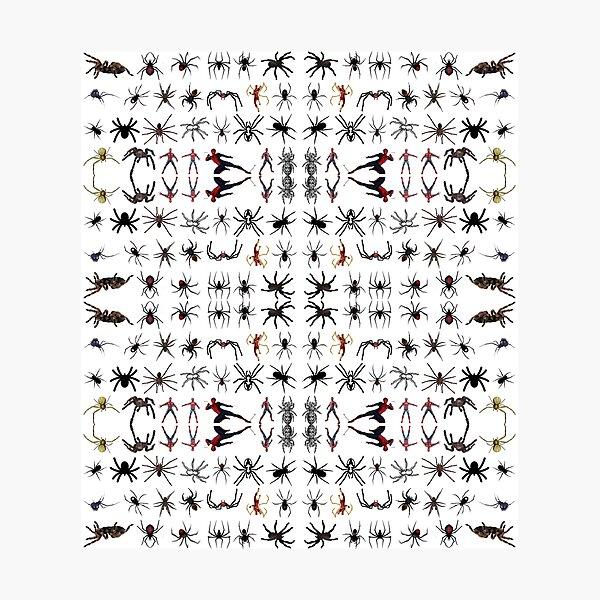 Spider, spinner, caterpillar, cross, cross-piece, frog, crossing, turnstile Photographic Print