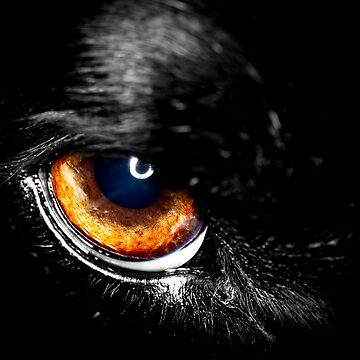 The Eye of Victor by SunDwn