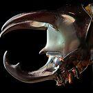 Kabuto helmet by blepharopsis