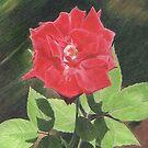 Rose Throwing Shadows by jmgreenartworks