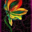 Tulip by ciriva