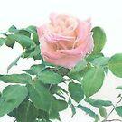 Rose by jmgreenartworks