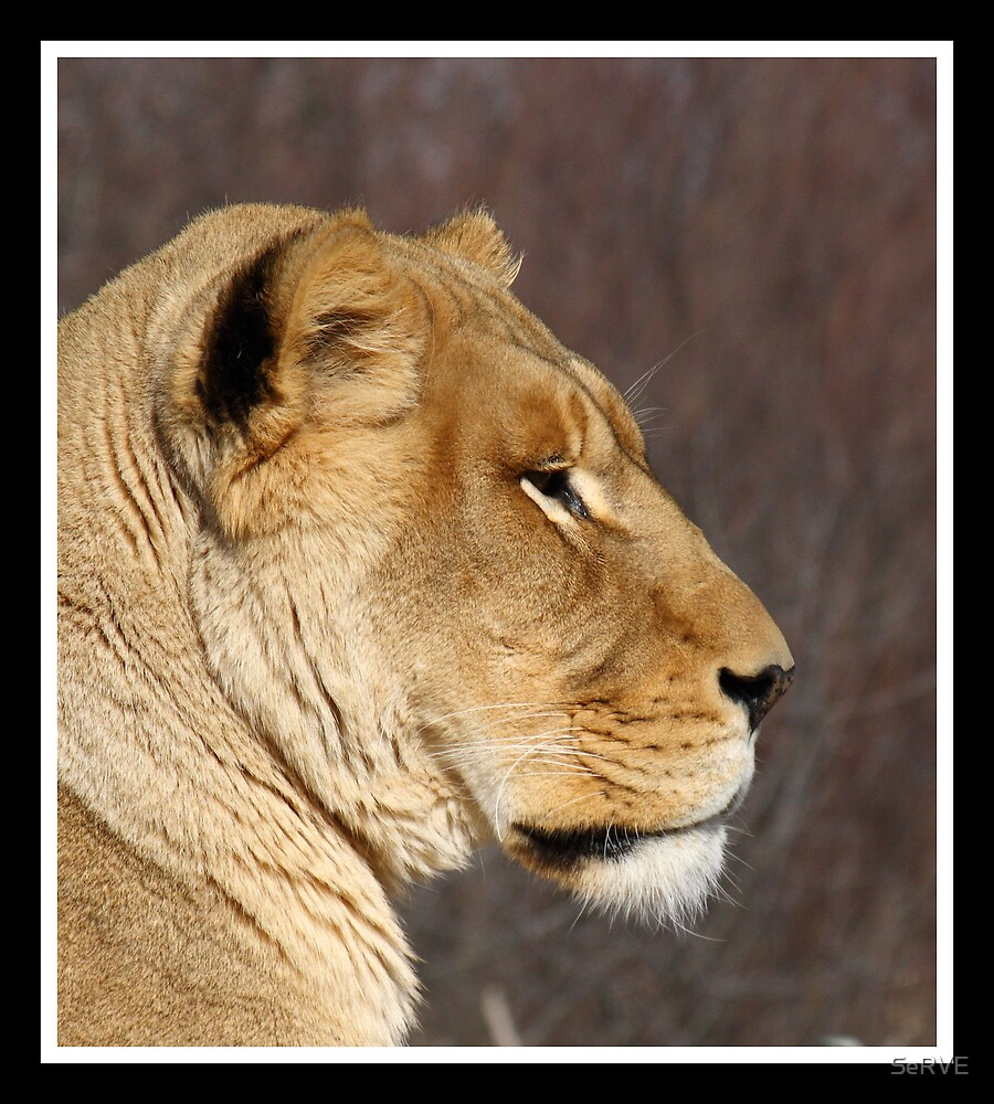 Lion's Head by SeRVE