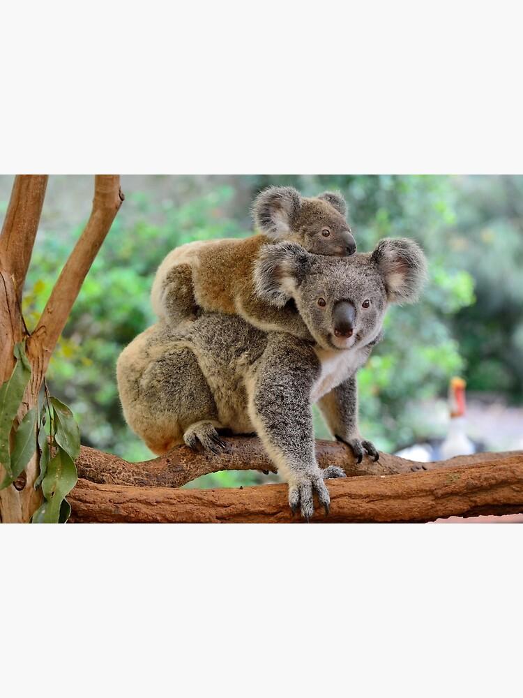 Koala and joey by AlizadaStudios