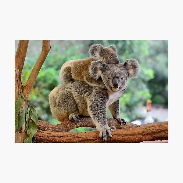 Koala and joey Photographic Print