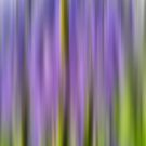 A Blur of Bluebells by Mandy Collins