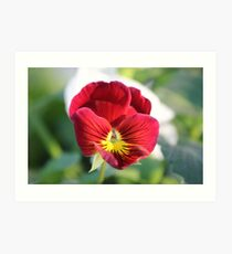 Annuals Flower Art Print