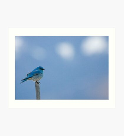 Bluebirds Return to Jackson Hole Art Print