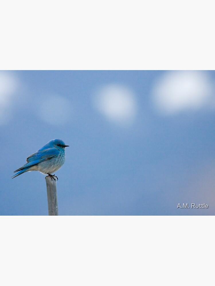 Bluebirds Return to Jackson Hole by annruttle