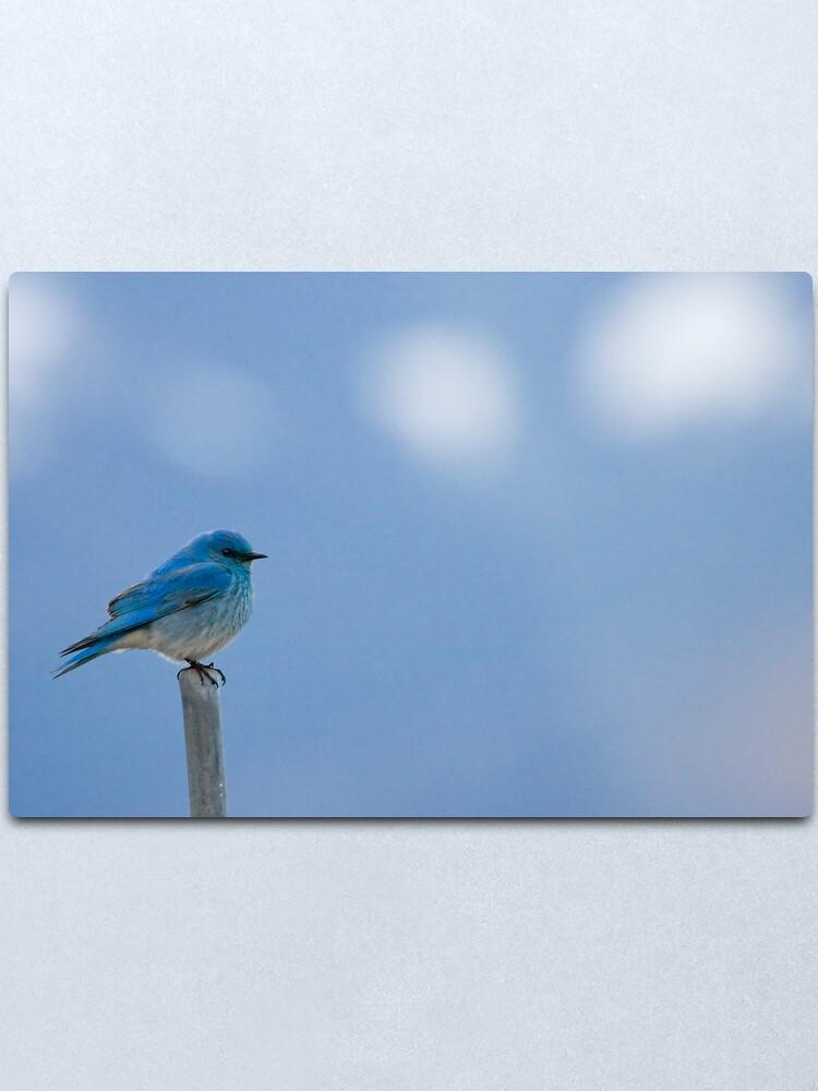 Alternate view of Bluebirds Return to Jackson Hole Metal Print