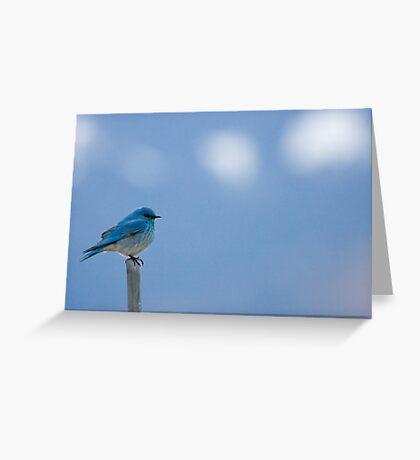 Bluebirds Return to Jackson Hole Greeting Card