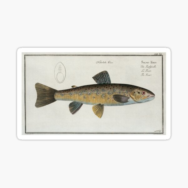 Vintage Illustration of a Brown Trout (1785) Sticker
