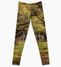 Oak Alley Leggings