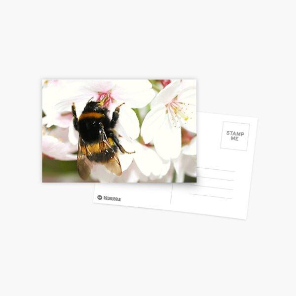 Busy Bee:) Postcard