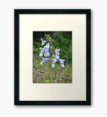 LYRE LEAF SAGE - A BEAUTIFUL FLORIDA WILDFLOWER Framed Print
