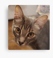 Ozzy le chaton Impression métallique