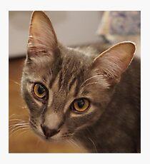 Ozzy the kitten Photographic Print