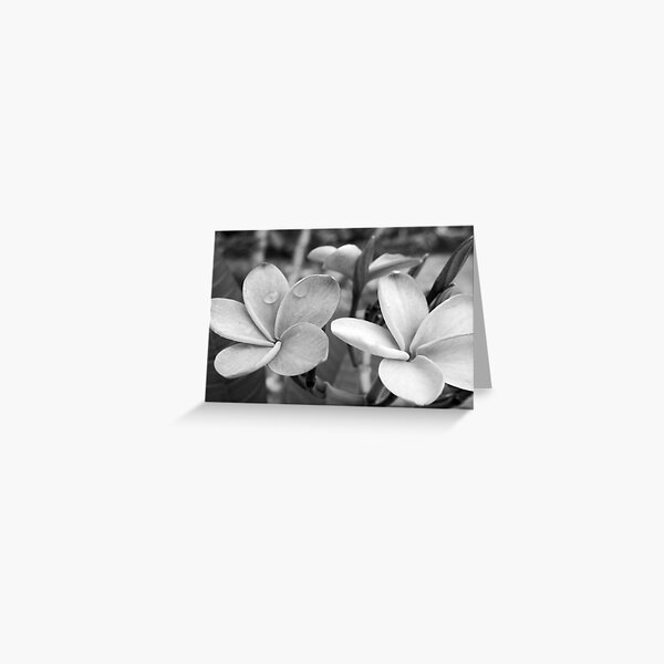 Drops on Frangipani B&W Greeting Card