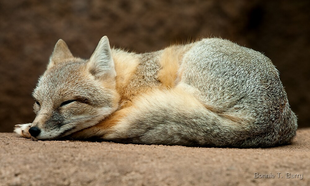 Little Sleeping Fox by Bonnie T.  Barry