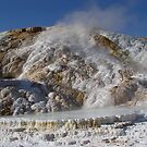 Mammoth Hot Springs by May Lattanzio