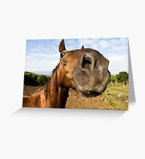 Inquisitive horse Greeting Card