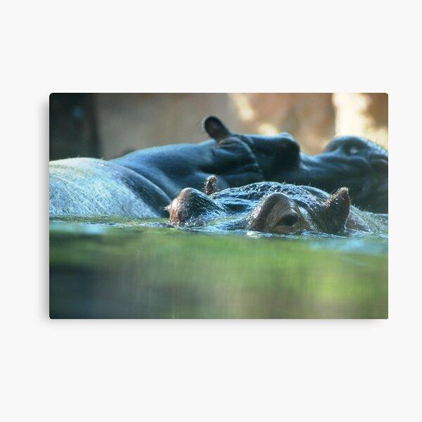 Hippo Pair Canvas Print