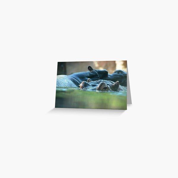 Hippo Pair Greeting Card