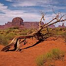 Gnarled Beauty of the Valley by Lucinda Walter