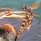 Darter  with   Cod by Trish Threlfall