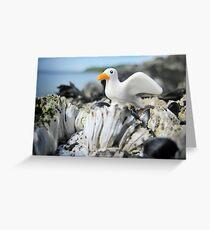 Sea-stuff Greeting Card