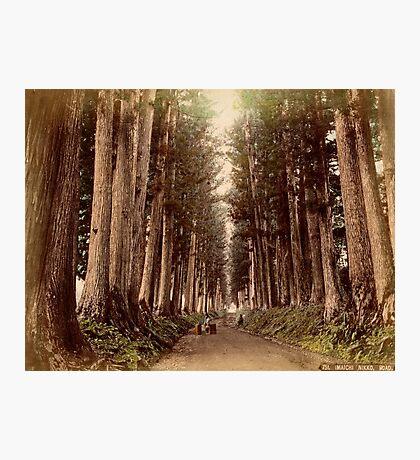 Imaichi Nikko Road, Japan Photographic Print