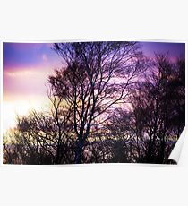 Forest Sunset Poster